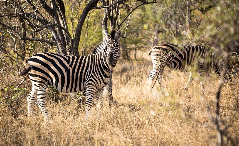 "On safari with DownUnder Africa Safaris -  <a href=""http://www.downunderafrica.com"">http://www.downunderafrica.com</a>"