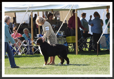 Adesa's E Trade (out of my litter of Liv x Tchoum).  Owned by Bobbi Kinley-Blewett.