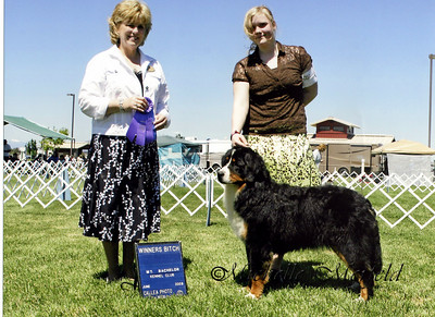 Celine (Coburg Hills Forget Me Not) winning her first points out of the 6-9 month old puppy class in Redmond, Oregon.