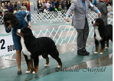 Rebel (Coburg Hills Breakin' The Rules) with Stacy Slade in Puyallup, January 2010.  He won a large, competitive 12-18 month old class.