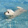 First swim 1