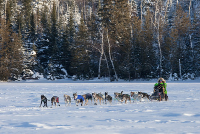 SLED DOGS 9992  Ryan Redington - Knik, AK - Crossing Hungry Jack Lake  2014 Gichigami Express Sled Dog Race - Cook County, MN