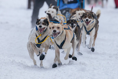 SLED DOGS 9870  Stage One Start in Grand Portage  2014 Gichigami Express Sled Dog Race - Cook County, MN