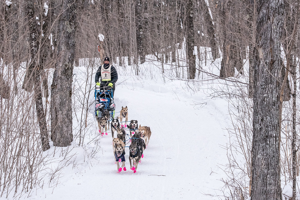"SLED DOGS 6643<br /> <br /> ""Sled Dogs in the Sugar Bush""<br /> <br /> 2016 John Beargrease Sled Dog Marathon - February 1, 2016<br /> <br /> Jason Campeau of Rocky Mountain House, Alberta runs his dogs through the sugar maple forest of Grand Portage on approach to the half-way turnaround point of the 2016 John Beargrease Sled Dog Marathon."