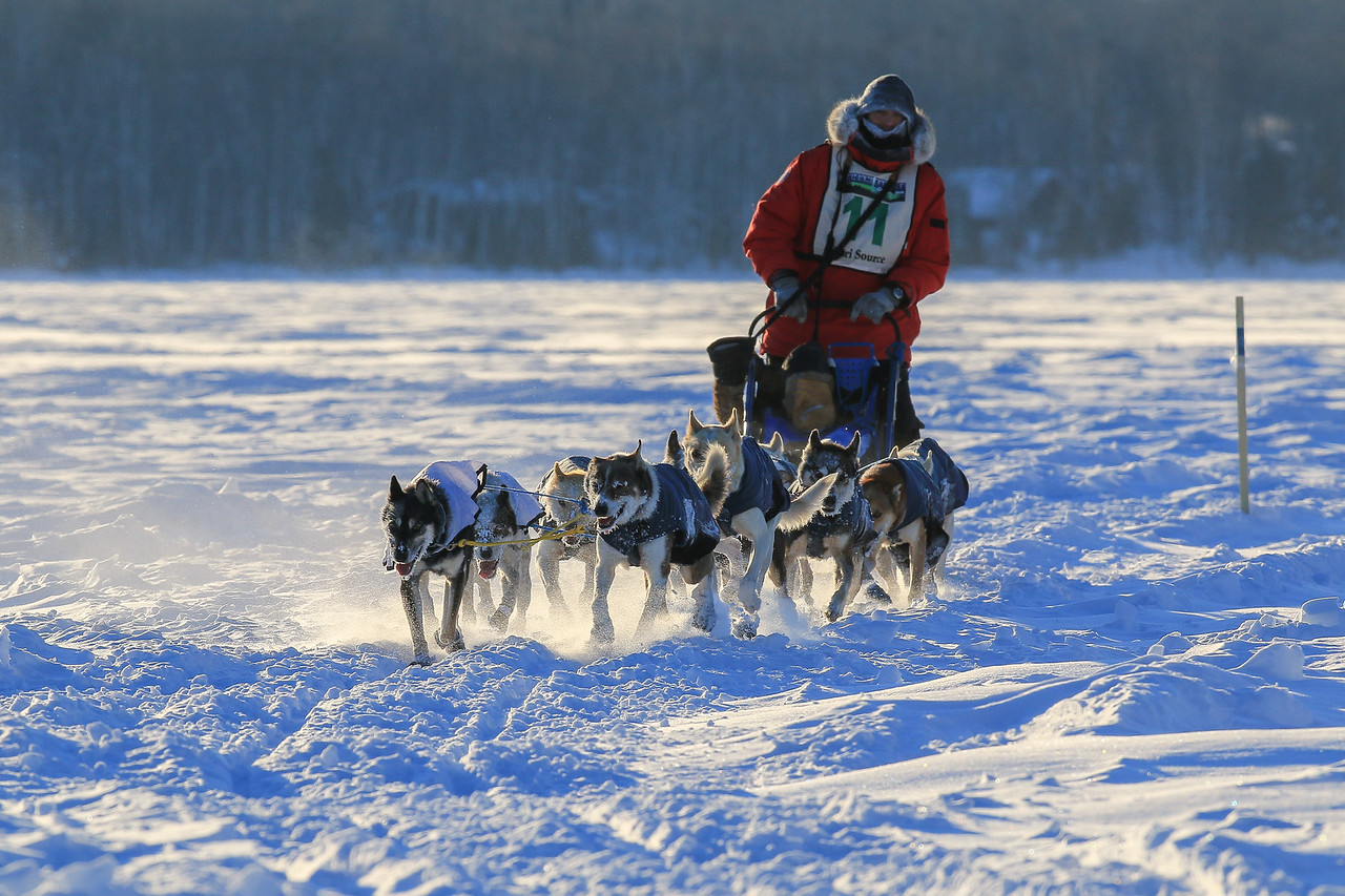 SLED DOGS 0856  Frank Moe - Grand Marais, MN - Crossing Devil Track Lake  2014 Gichigami Express Sled Dog Race - Cook County, MN
