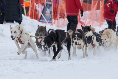 SLED DOGS 9721  Stage One Start in Grand Portage  2014 Gichigami Express Sled Dog Race - Cook County, MN