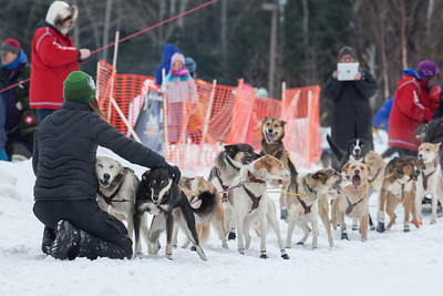 SLED DOGS 9749  Stage One Start in Grand Portage  2014 Gichigami Express Sled Dog Race - Cook County, MN