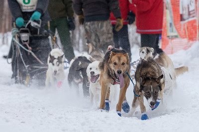 SLED DOGS 9860  Stage One Start in Grand Portage  2014 Gichigami Express Sled Dog Race - Cook County, MN