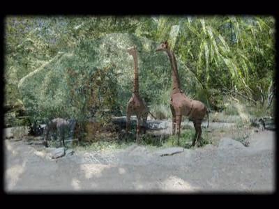 Slideshow: Safari West