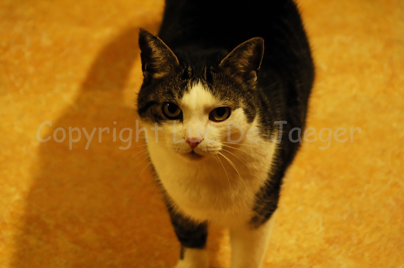 Tony, the cat. Shot with the Nikkor 18-200mm VRII lens in difficult lighting. Obviously no flash could be used not to upset the cat. ISO raised to 1600 and processed in neatimage and then in DXO Optics for automatic lens corrections. No other post processing though.