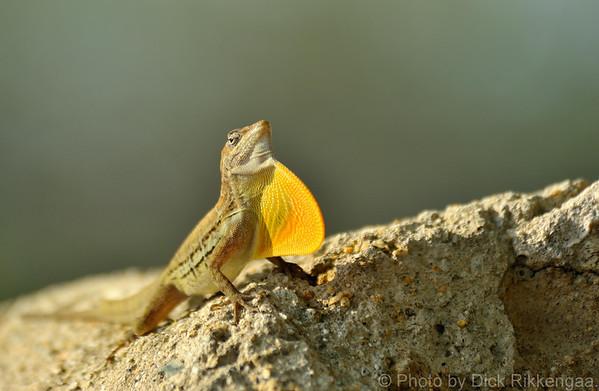 Small Lizards