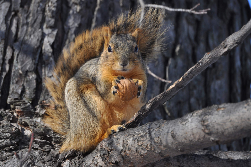 Squirrel holding nut