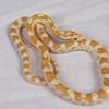 """Elvis. Albino """"Butter"""" Corn snake"""