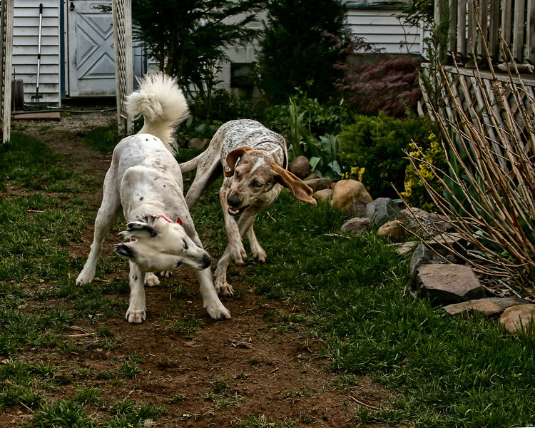 IMAGE: http://www.brokenfencephotography.com/Animals/Snow-The-Dog/its-on-8/527101157_cRceu-L.jpg