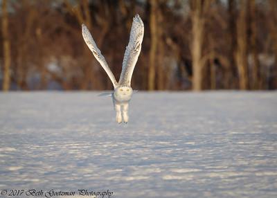 snowy olws, Grinch-7