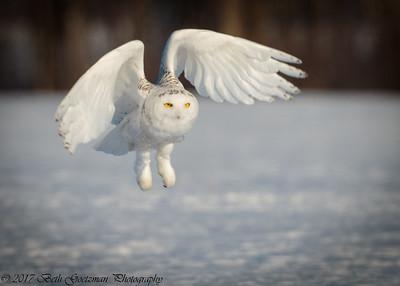 snowy olws, Grinch-4