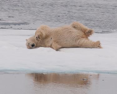 Svalbard Norway 2010