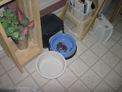 Sonny's last bowl of food that he would not eat for a week.