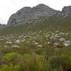 Fynbos, Rooi Els
