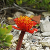 flower?, Cape Agulhas