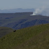 fires in the Drakensberg, baboon in foreground