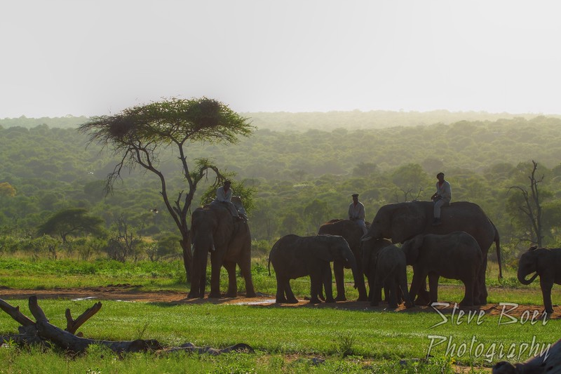 Elephants and handlers