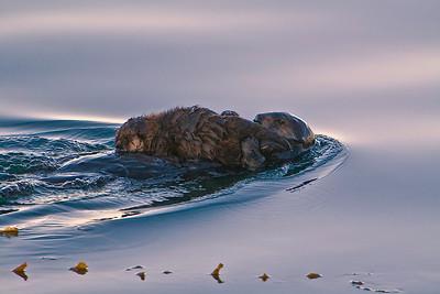 Otter Dreamscape