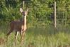 #13 Myakka State Park Wildlife