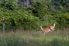 #1 Myakka State Park Wildlife