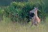 #7 Myakka State Park