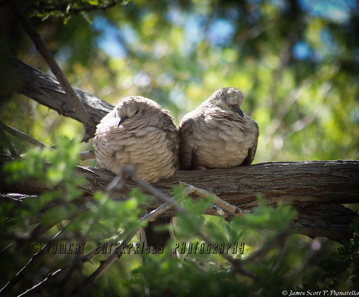 """""""Lovebirds"""""""