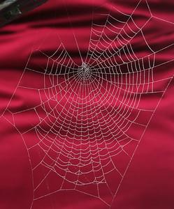 9174 Spider Web