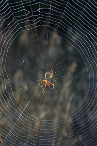 0603 Spider on Web