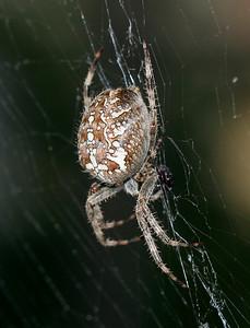 9093 Spider