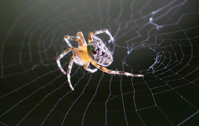 9221 Spider