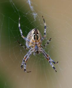 5072 Spider