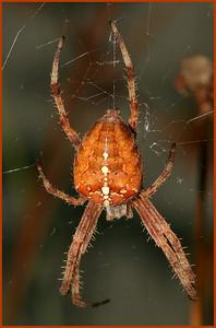 4138 Spider