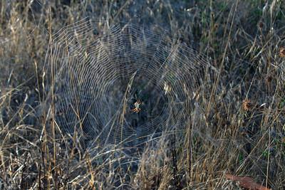 0594 Spider & Web