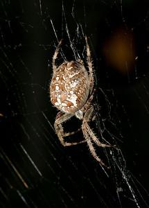 9098 Spider