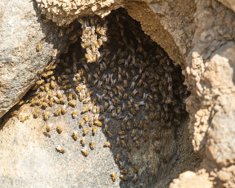 This hive has been active for about 10 years