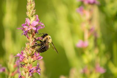 8-3-2014 Bees 28 SM