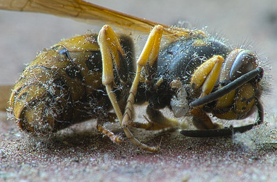 7-10-2014 Dead Bee HDR SM