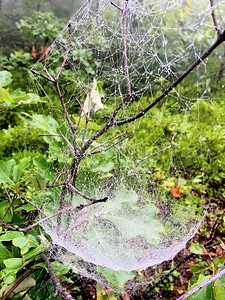 Spider web in forest
