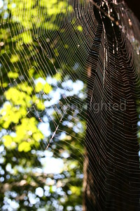 Spider Web in Sunshine - 10/13/06