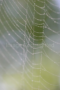Spider Web with Dew - 10/9/06