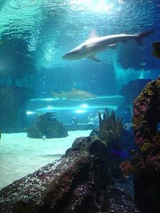 Shark Tank, Newport Aquarium