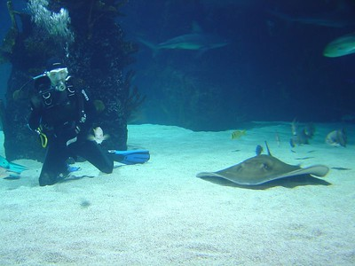 Divers and stingray, Newport Aquarium