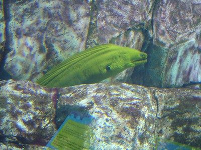 That's a moray, Newport Aquarium