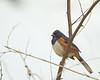 New Bird #1