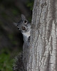 Tree squirl